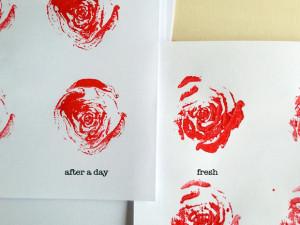 2_print-veggie_Krautstil-1-fresh-and-dry-Kopie
